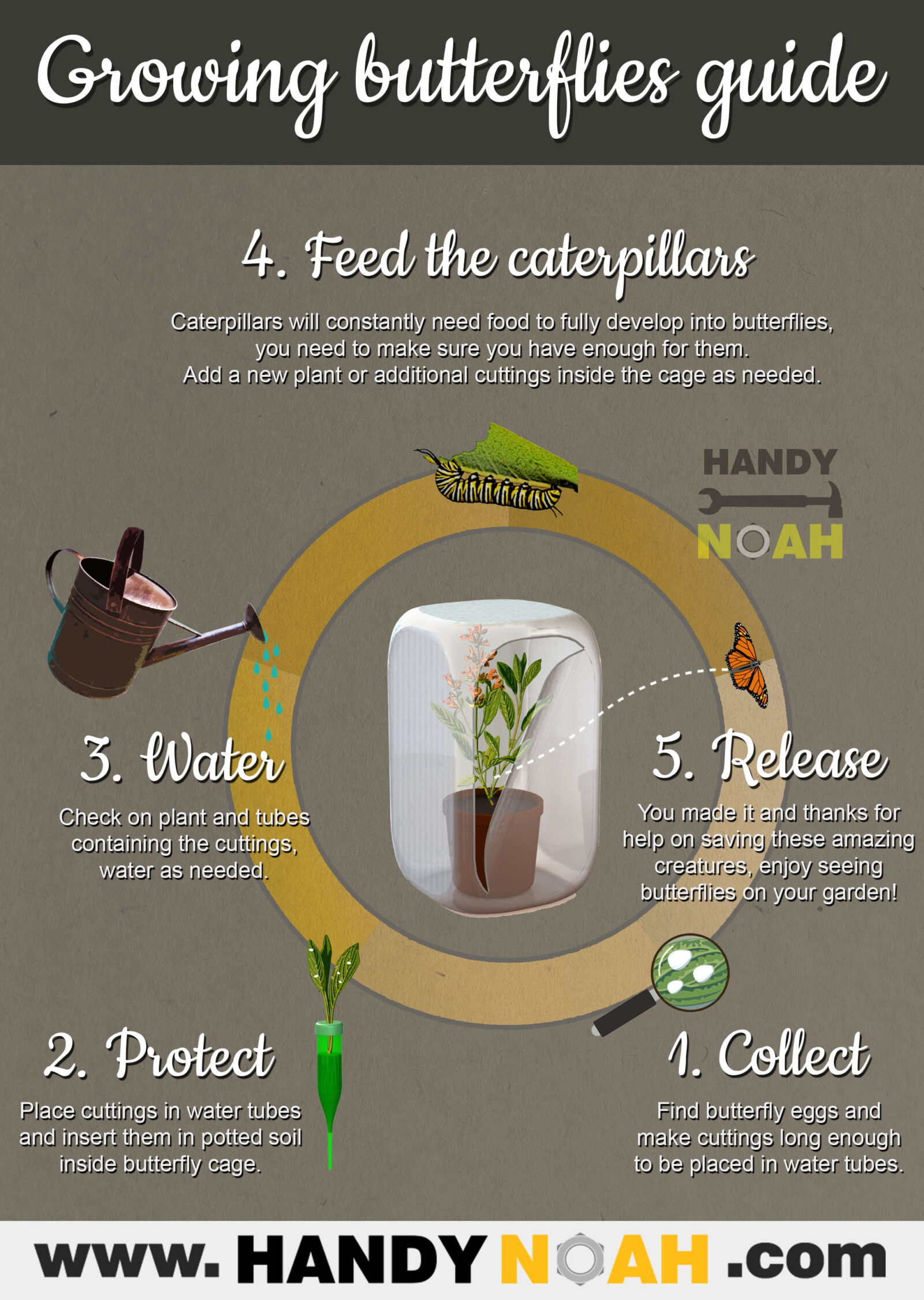 An easy simple guide to grow butterflies on your garden step by step - DIY