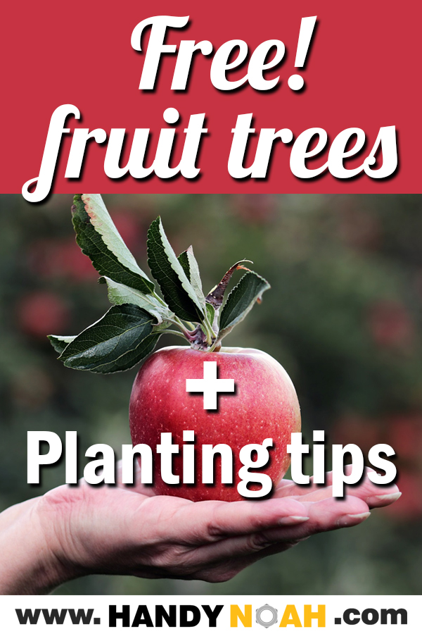 free fruit trees and planting tips